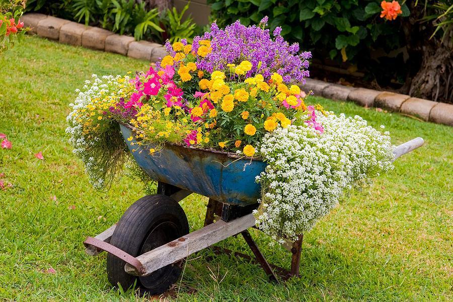 Ảnh tiểu cảnh sân vườn mini với xe rùa