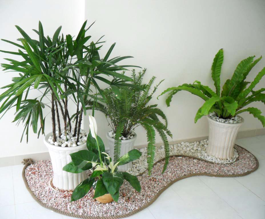 Hình ảnh sân vườn mini trong nhà