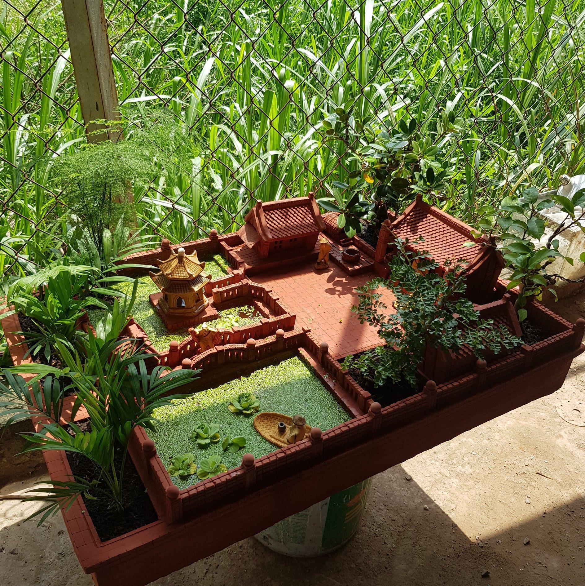 Hình ảnh tiểu cảnh sân vườn nhà mini
